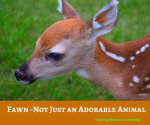 A fawn is very cute. But fawn is also the name of one of our four primary danger responses. Most people know about Fight and Flight. Many people have heard of Freeze, but very few have heard of Fawn. This is because it's existence was only suggested recently. The Fawn danger response is when someone attempts to avoid danger by being nice... to the extreme! This is when a person will expend a great deal of effort to keep the situation/individual from becoming dangerous. Then if it becomes dangerous, they will go to great lengths to diffuse the situation. They may take responsibility or blame for something that's not their fault or ignore their own needs or desires in order to make the dangerous situation safe. Adults who experienced intense danger when they were young may be more inclined to use the Fawn response to danger. Their best defense, as a powerless child, was to keep everyone happy.